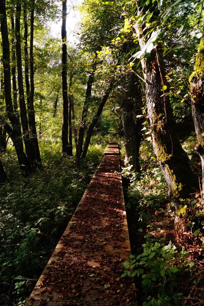 boardwalk i søheden skov